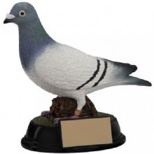 Elite Pigeon Award